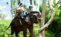 Bali-Zoo-Balade-Dos-déléphant-.jpg