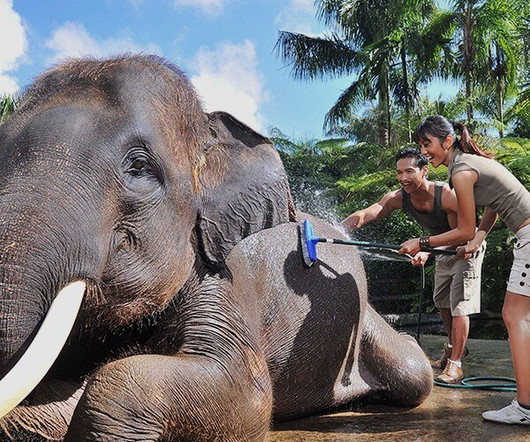Home-Mason-Adventures-Elephant-Jumbo-Was