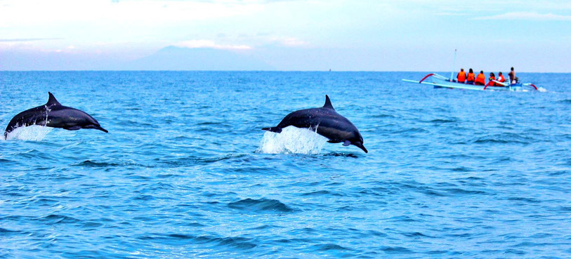 dolphins-bali.jpg