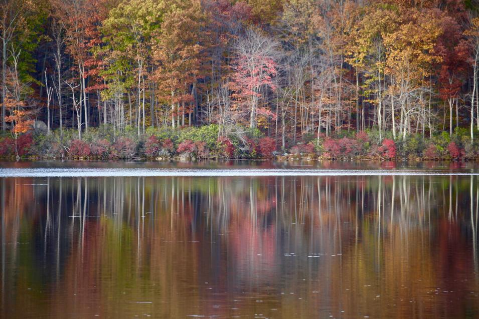 Nature #7 - Fall - Upstate NY