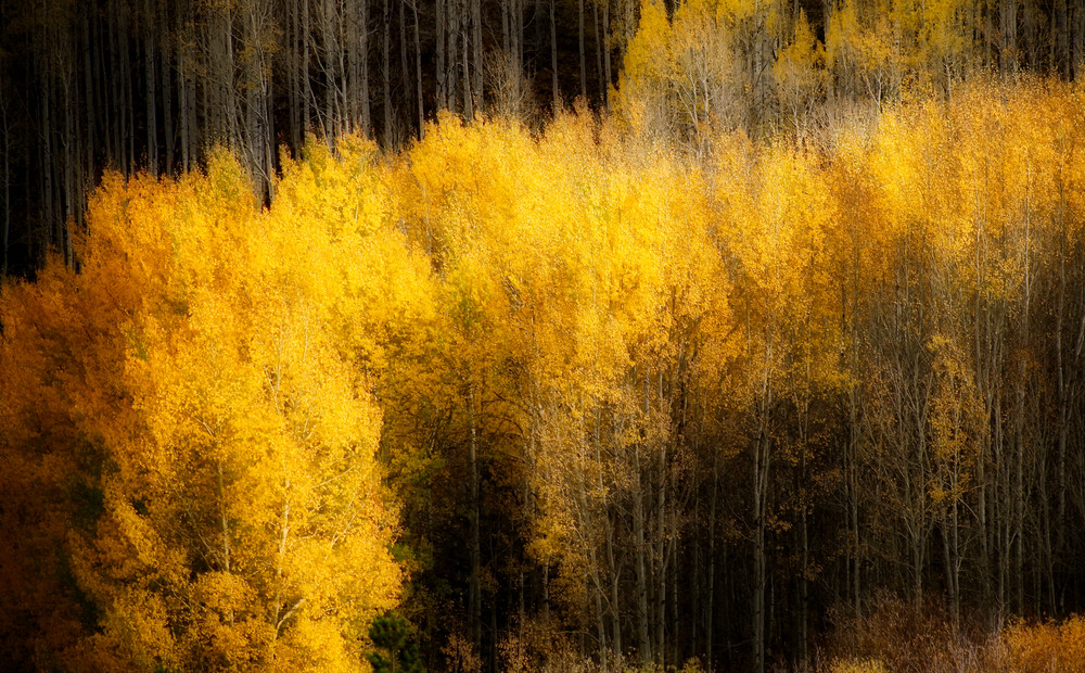 Nature #1 - Fall - Vail, CO