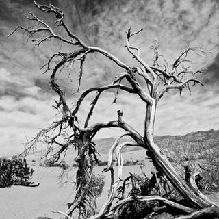 Death Valley Black & White 1