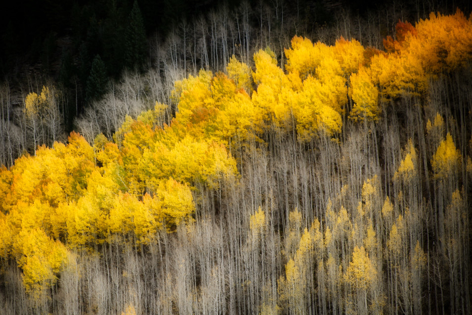 Nature #3 - Fall - Vail, CO