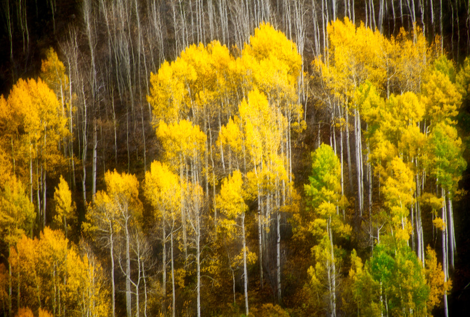 Nature #4 - Fall - Vail, CO