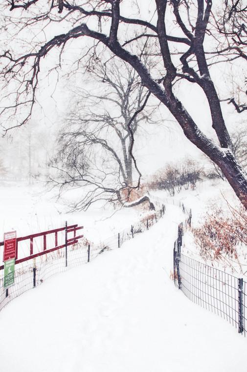 New York #6 - Winter, Central Park