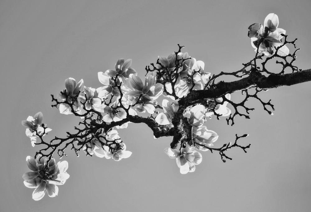 Black & White flowers #1