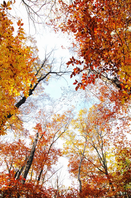 Nature #5 - Fall - Central Park, NY