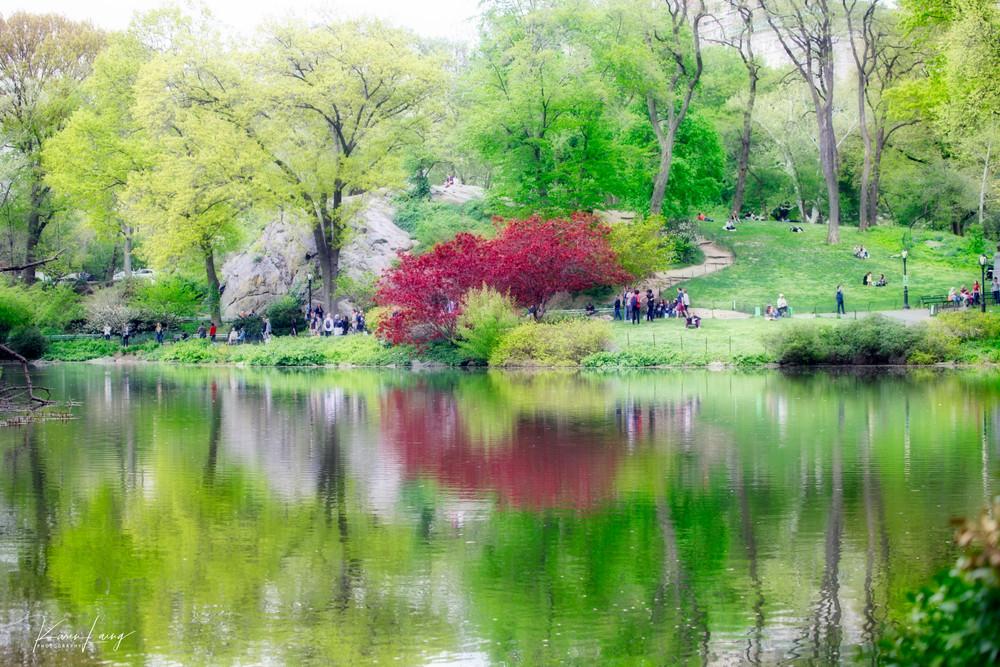 New York #5, Spring - Central Park