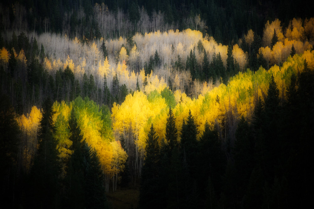 Nature #2 - Fall - Vail, CO