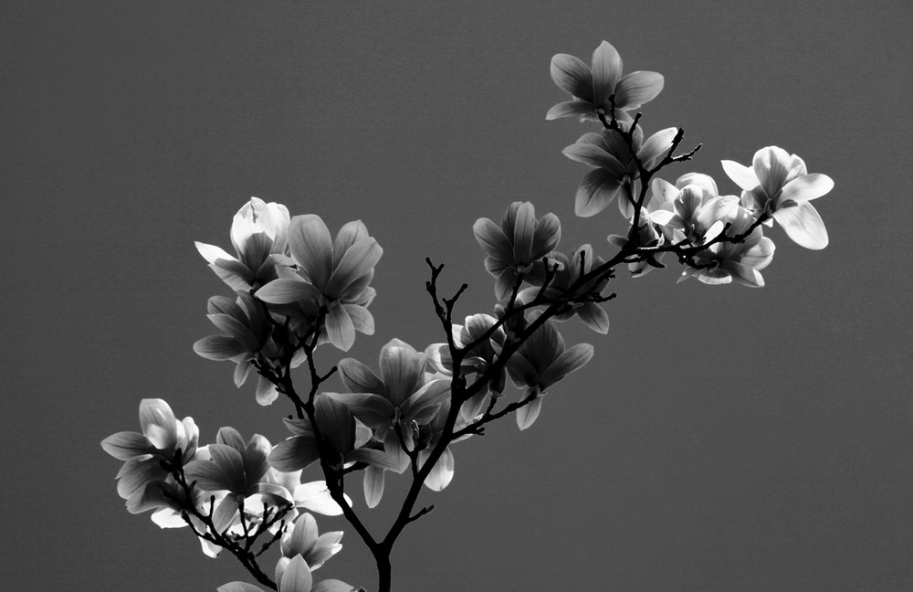 Black & White flowers #2