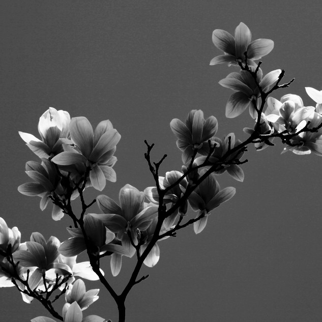 Black & White 1