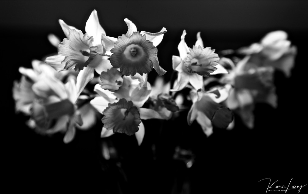 Black & White flowers #6