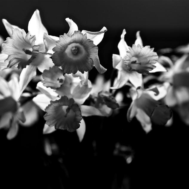 Spring Flowers Black & White