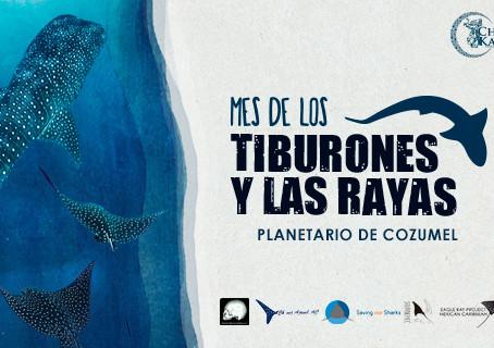 """Planetario de Cozumel festejará en junio el """"Mes de los Tiburones y las Rayas""""."""