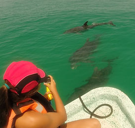 yamel delfines.JPG