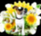 Dog Lovers Festival Logo