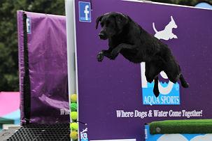 Dog Lovers Aqua Sports