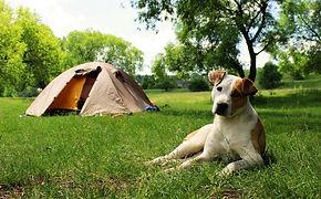 dog-tents.jpg