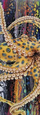 Blue Ringed octopus 2.jpg