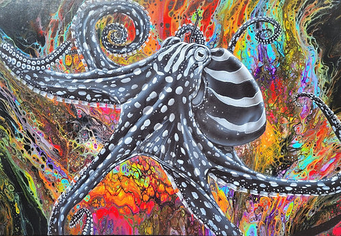 Pacific Striped Octopus 2 11x14 print