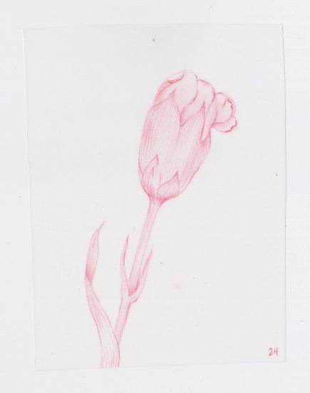 49 Flowers, #24 (2016)