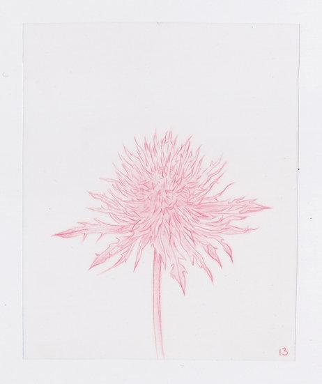 49 Flowers, #13 (2016)