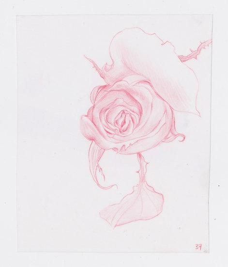 49 Flowers, #37 (2016)
