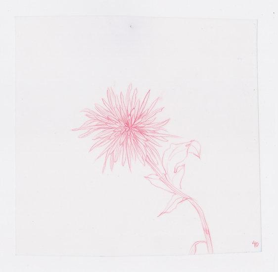 49 Flowers, #40 (2016)