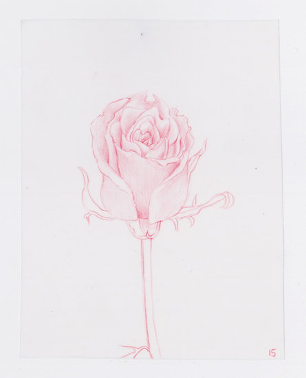 49 Flowers, #15 (2016)
