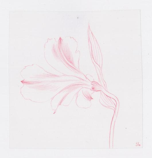 49 Flowers, #36 (2016)