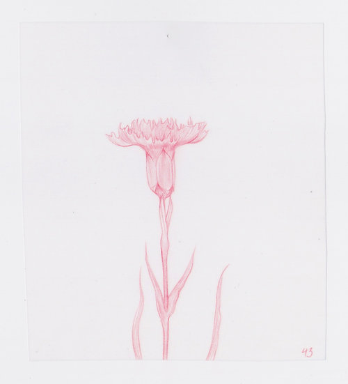 49 Flowers, #43 (2016)