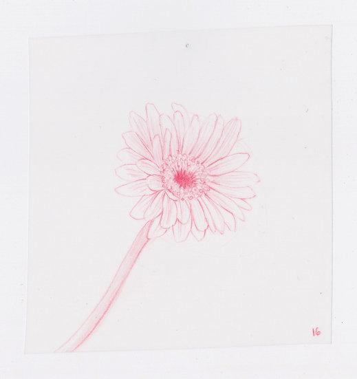 49 Flowers, #16 (2016)