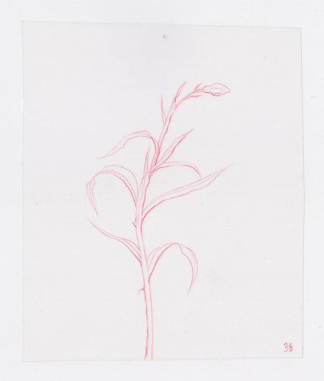 49 Flowers, #38 (2016)
