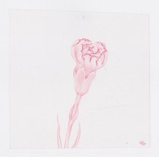 49 Flowers, #46 (2016)