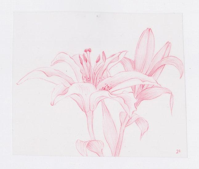 49 Flowers, #21 (2016)