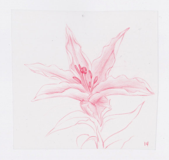 49 Flowers, #14 (2016)