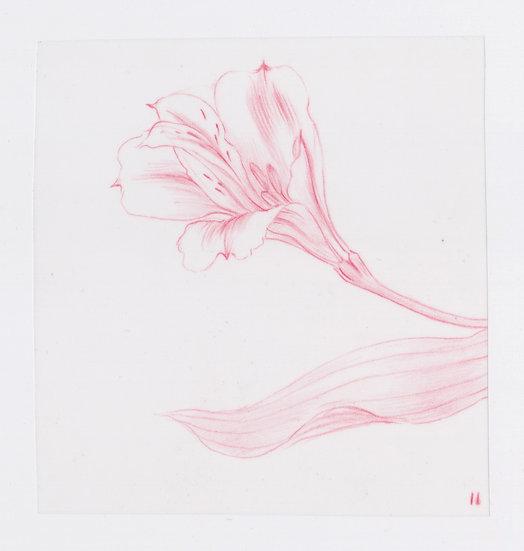 49 Flowers, #11 (2016)
