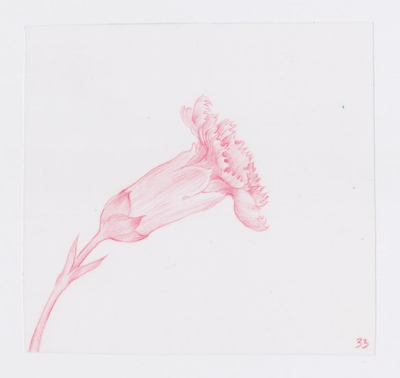 49 Flowers, #33 (2016)
