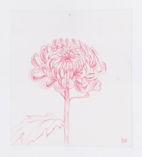 49 Flowers, #30 (2016)