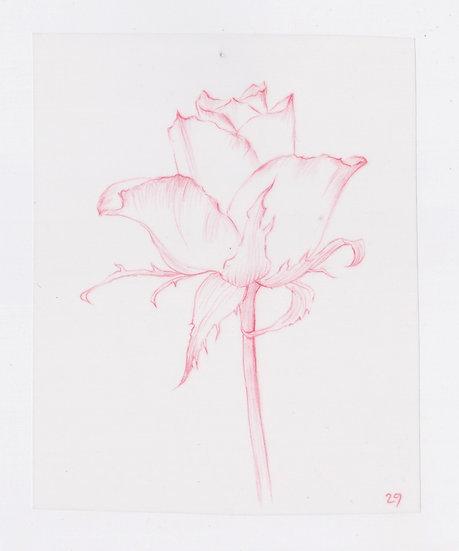 49 Flowers, #29 (2016)