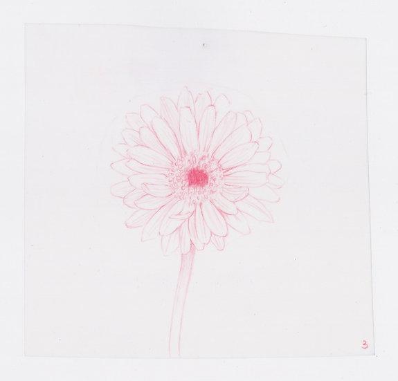 49 Flowers, #3 (2016)
