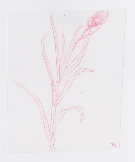 49 Flowers, #25 (2016)