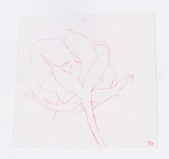49 Flowers, #26 (2016)