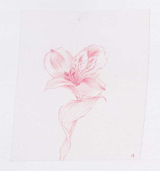 49 Flowers, #17 (2016)