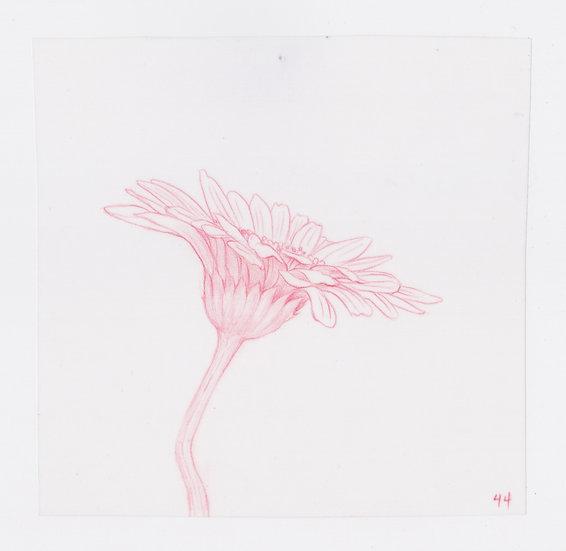 49 Flowers, #44 (2016)