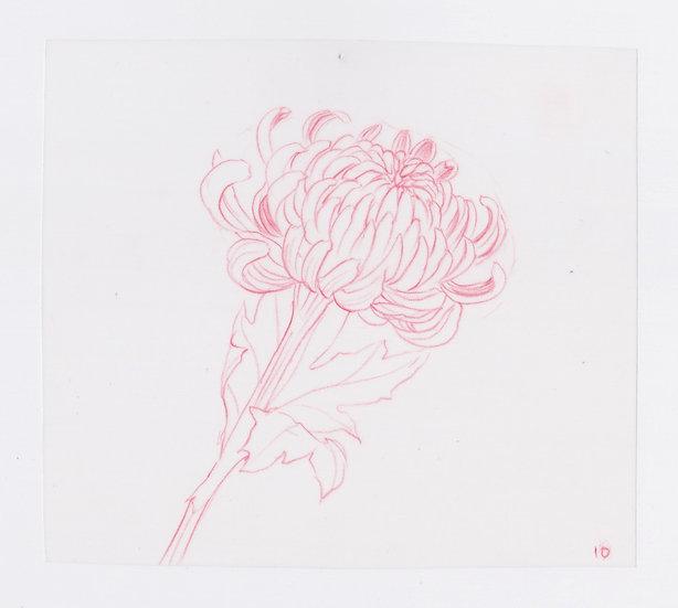 49 Flowers, #10 (2016)
