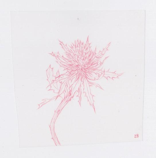 49 Flowers, #28 (2016)