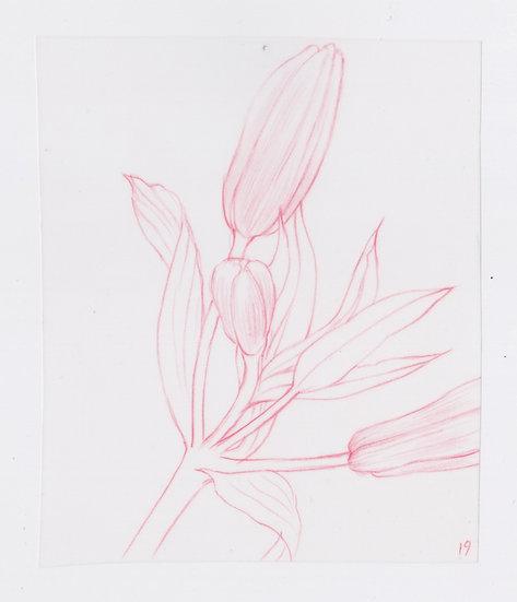 49 Flowers, #19 (2016)