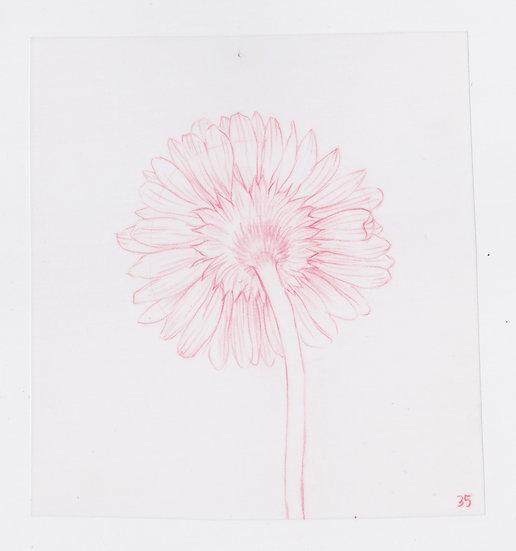 49 Flowers, #35 (2016)