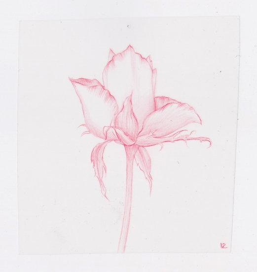 49 Flowers, #12 (2016)